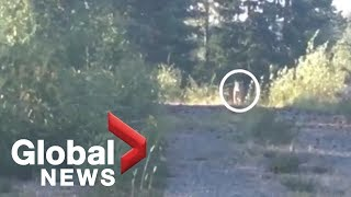B.C. woman fends off wild cougar by blasting Metallica song