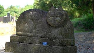 最大級の「猫神様」なぜそこに? 缶詰のお供えも…愛された歴史