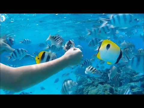 Snorkeling Bora Bora 2 (French Polynesia) 2
