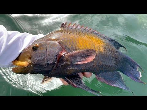 New Species Of Fish Part 2