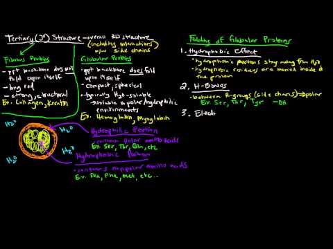 Protein Structure (Part 4 of 4) - Tertiary Structure - Fibrous and Globular Proteins