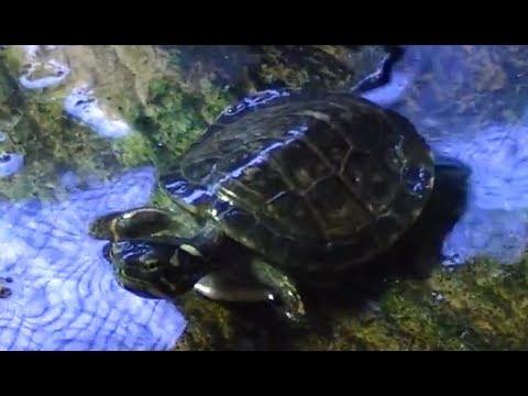 Pet Turtles - How To Handle & Tame FunnyDog.TV