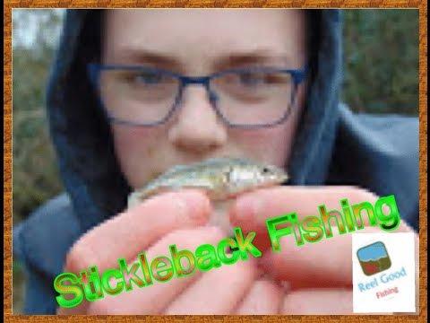 Small Stream Stickleback Fishing: RGF 2016