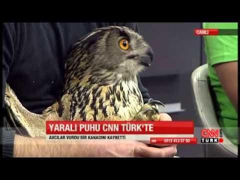 CNN TÜRK yayınının konuğu puhu kuşuydu