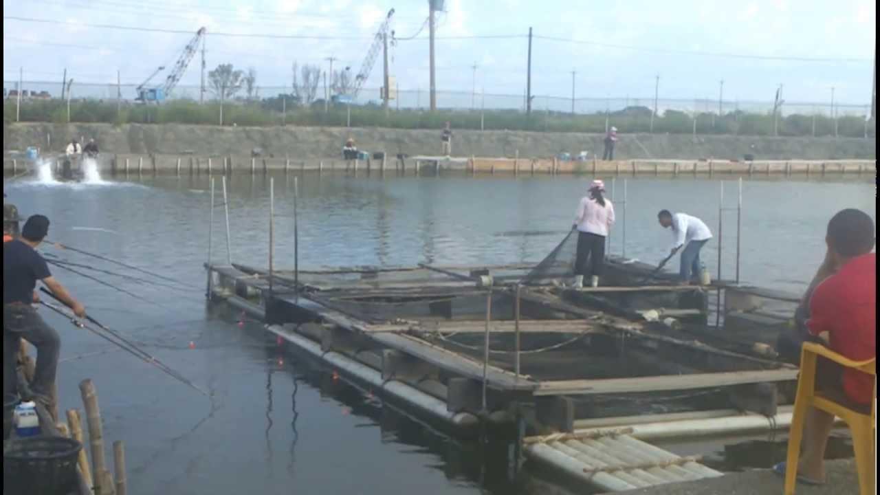 七股大西洋海釣場 - YouTube