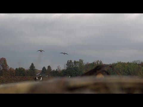 Goose Hunting In Pennsylvania  2013