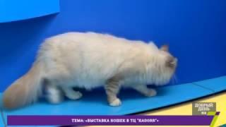 Выставка кошек в ТЦ ''Kadorr''