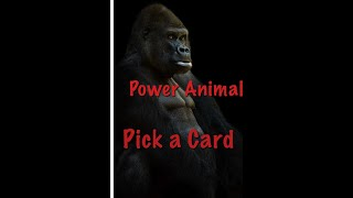 PICK A CARD POWER ANIMALS!