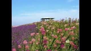 北海道中富良野「ファーム富田」~上富良野「かんのファーム」の花畑を眺...