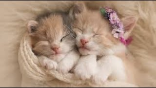 KITTENS!PUPPIES! CUTE AND FUNNY ANIMALS