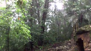 Mexico 2011 - Los Niños de Zapatos - Een tempel midden in de jungle; part II, omdat het kan!!