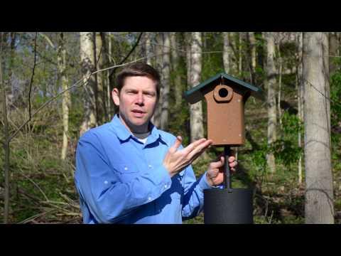 How to Provide a Safe Nest Box for Bluebirds