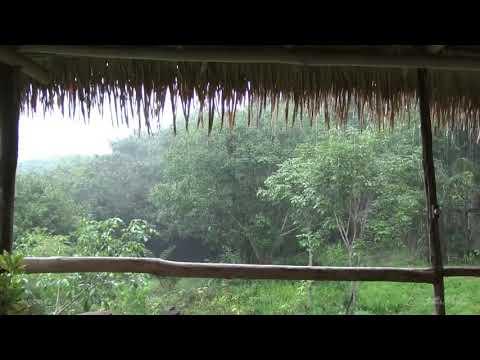 8 heures de pluie et gros orage sous en toit en foret