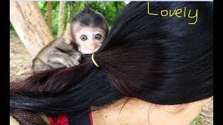 Wow! So adorable cute baby monkey Bree! It is a good relationship with cute Bree & human