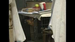 Prison Inmates Train Rescue Dogs