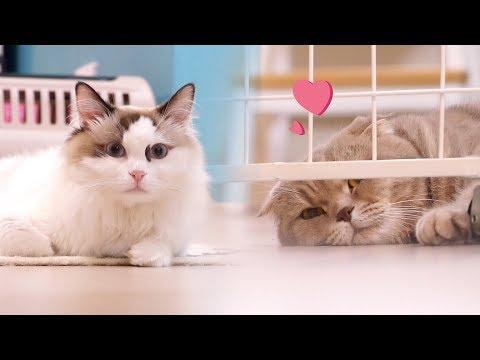 첫사랑 치순이를 다시 만난 고양이 이즈 [설렘주의]