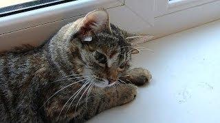 Пятиухая кошка-мутант Лунтя. Реальная история