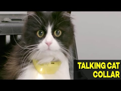 World's First Talking Cat Collar Now Available