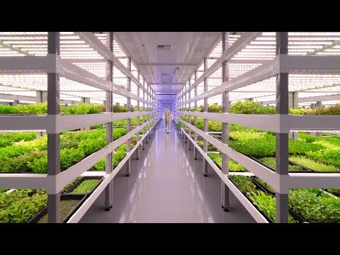 wine article Growing Up How Vertical Farming Works  The B1m