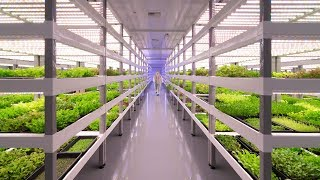 Growing Up: How Vertical Farming Works