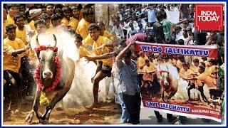 Statewide Agitation Against Jallikattu Ban In Tamil Nadu