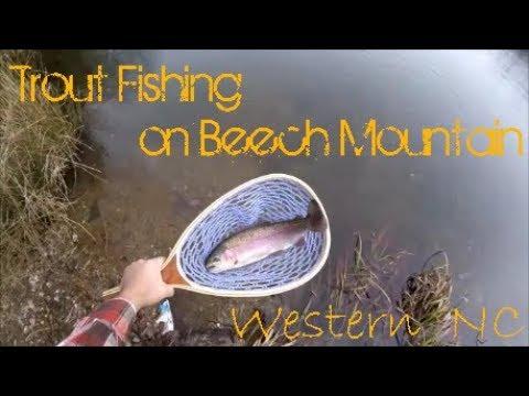 Trout Fishing On Beech Mountain, NC (Western North Carolina Mountains)