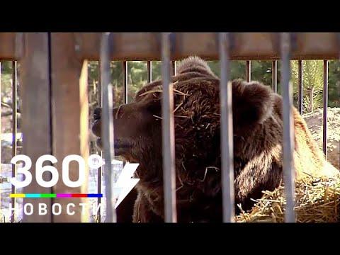 Вопрос: В каких странах мира есть зоополиция?