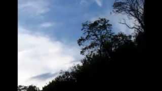 Azoemia - Oppieria Mala Mela live