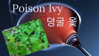 덩굴 옻 Poison Ivy_보통 아이비와 어떻게 다른…