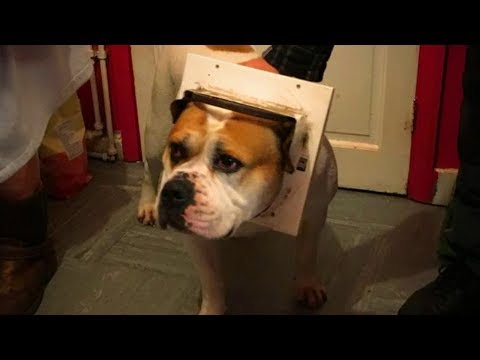 Cute Pets 😍😍 Cute Dogs Doing Funny Things (Part 2) [Funny Pets]