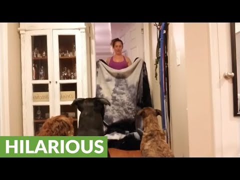 Trio of dogs participate in 'What The Fluff' challenge