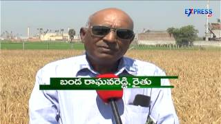 Success Story of Wheat Farming by B Raghava Reddy Nalgonda Dist-Express TV