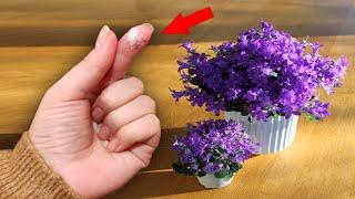 1 грамм этого под домашний цветок, такой красоты вы ещё не видели, не узнаете ваши цветы