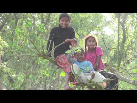 Sauraha Nepal recording and Rhino attack HD
