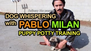 Dog Whispering With Pablo Milan: Puppy Potty Training | Anthony Ma