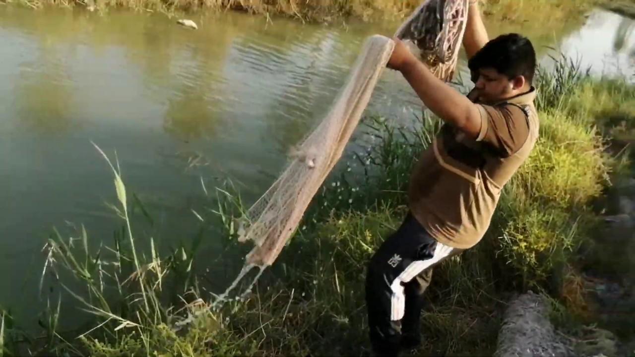 صيد السمج في السليه.