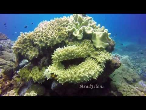 Tenggol Island (22/5/2016)