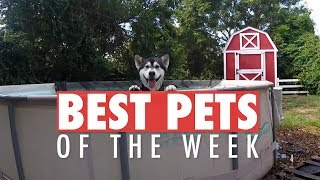 Best Pets of the Week | December 2017 Week 1
