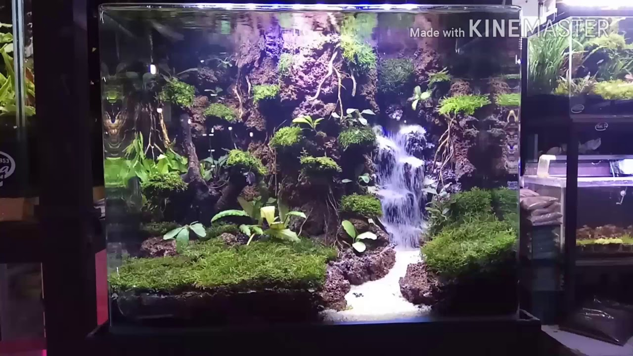 Aquascape forest with a sand waterfall ( hutan air terjun ...