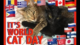 ????AUG 8 is WORLD CAT DAY????A Tribute to our International Cat Community????