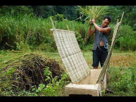 Primitive Skills: How to Harvest Rice?