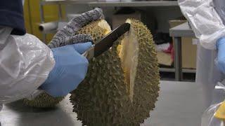 Spike in demand: durians enjoy online virus boom in Malaysia | AFP