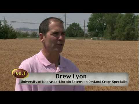 Western Nebraska Crops - Market Journal - July 6, 2012
