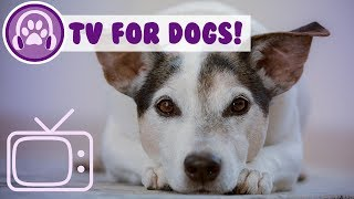 Dog TV: Videos and TV for Dogs and Puppies to Watch! NEW 2018!