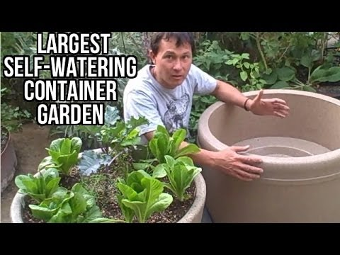 Largest self watering container garden lasts a month without watering youtube for How to water a garden