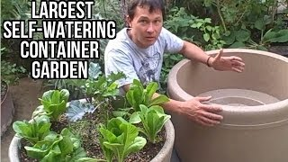 Largest Self Watering Container Garden Lasts a Month Without Watering
