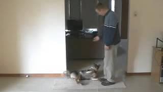 Dog Training Secrerts!+ Potty Training Tips For Puppies,careers In Dog Training,dog Trainers In Ct