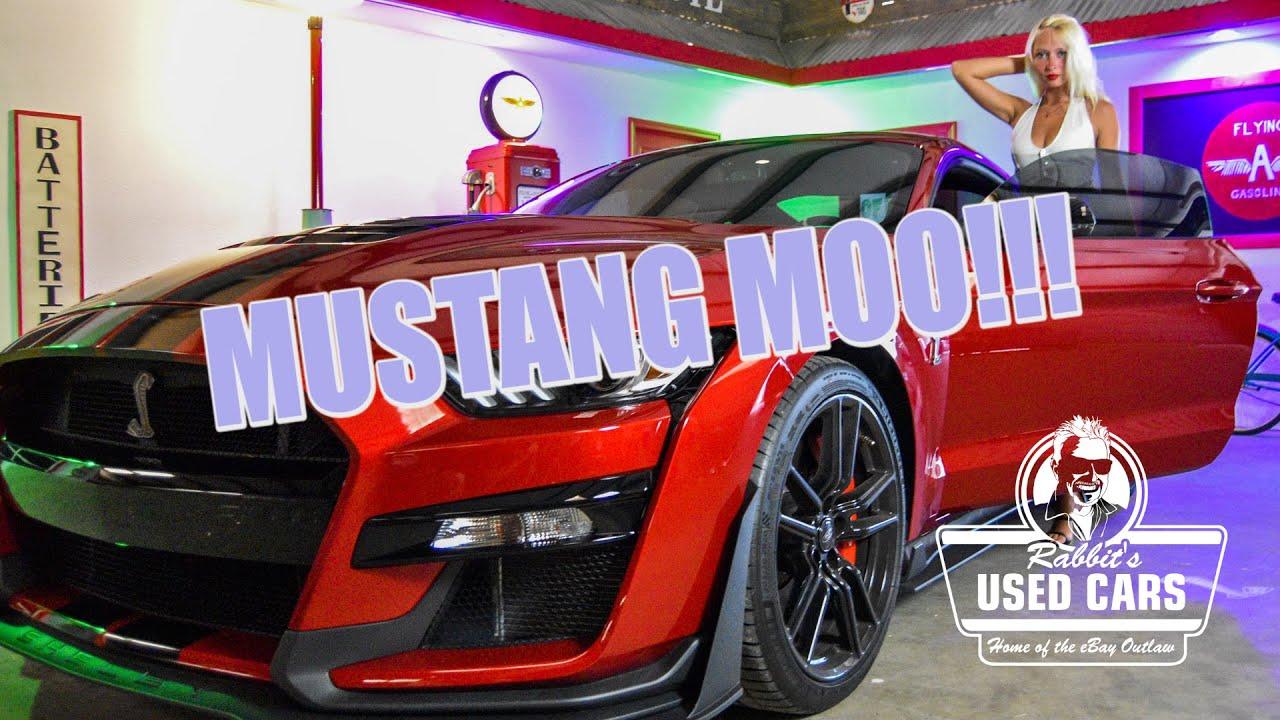 Mustang MOO! - Rabbit's Used Cars