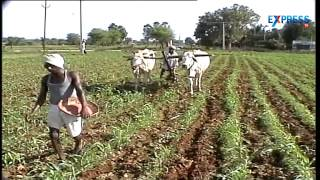 Tips for Maize cultivation by agriculturists V Narasimha Reddy - Paadi Pantalu