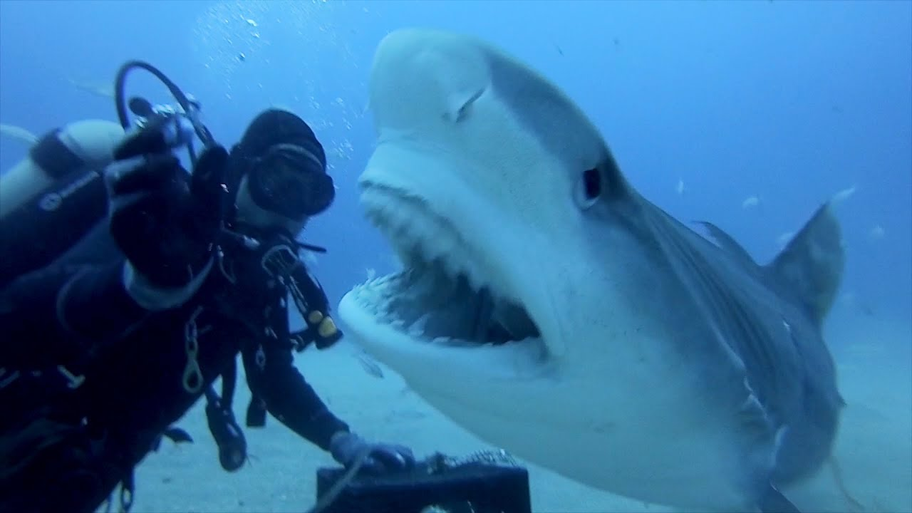 GoPro: Petting A Tiger Shark - YouTube